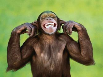 Minding the Monkey Mind