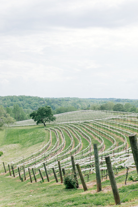 James & Michelle's Vineyard Wedding at Montaluce Winery and Restaurant