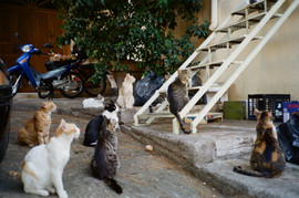 Alley Cats in Athens, 2017