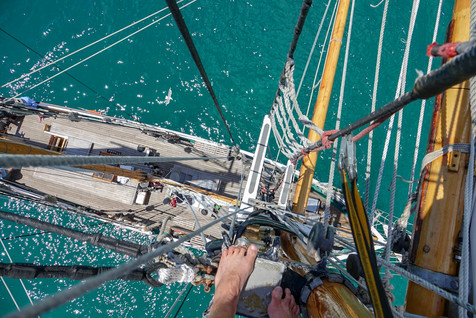Northland: tall ships, dolphins and mermaid pools