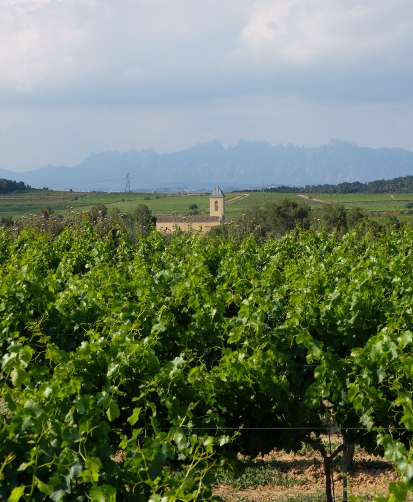 Artcava vineyards and camping aire view
