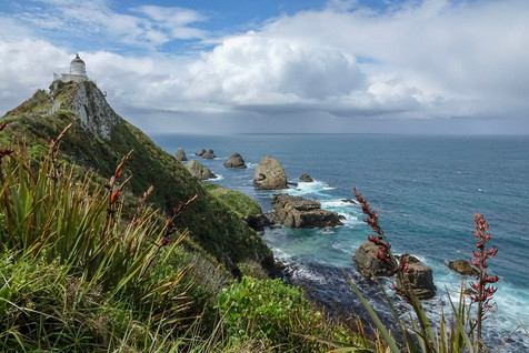 Southern Scenic Route: penguins, sealions and rainforests