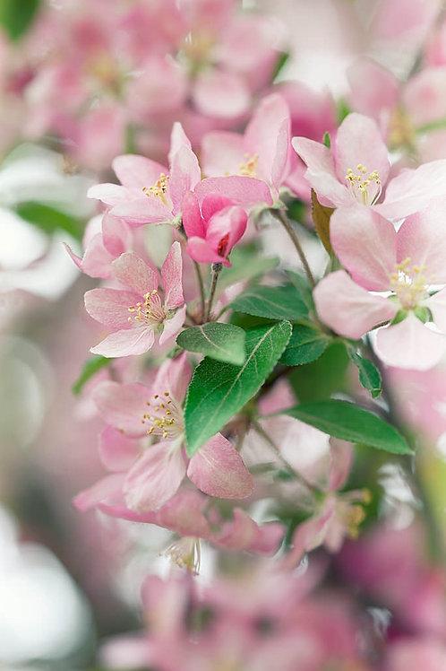 Vertical Spring Flowers
