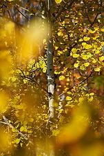 Blur of Fall