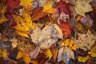 Banning Leaves
