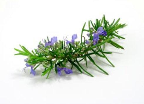 Rosemary, Ct. Verbenone  5 ml