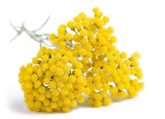 Helichrysum (Organic) 15% in Jojoba, 5 ml
