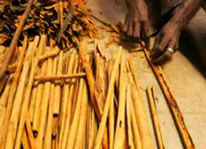 Cinnamon, Bark (Organic) 20% in Jojoba, 10 ml