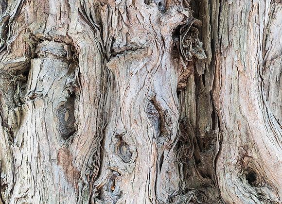 Muhuhu African Sandalwood, Wild 10 ml