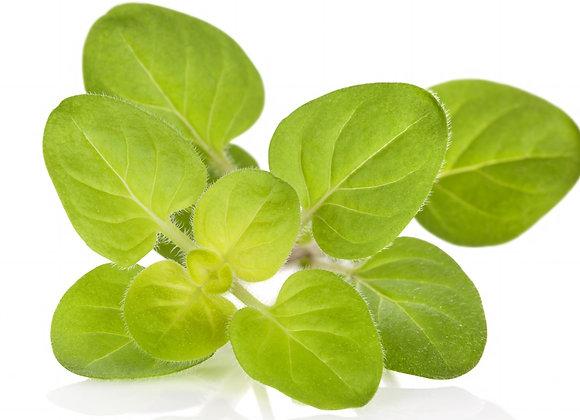 Marjoram, Sweet 10 ml or 15 ml diluted to 25% in jojoba