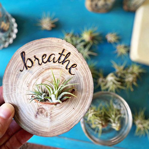 4 inch breathe with air plant