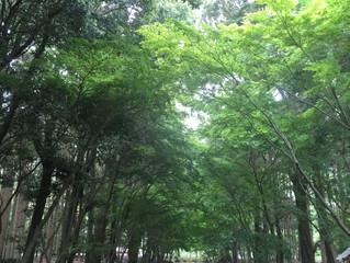 日本には1400年前からアーユルヴェーダが!