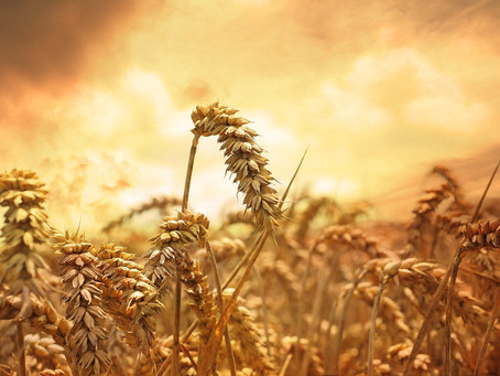 Clinging to Summer with Lughnasadh