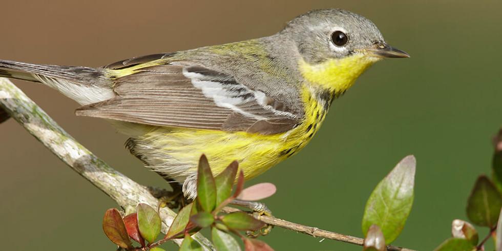 Spring Bird Walk with the Alan Devoe Bird Club