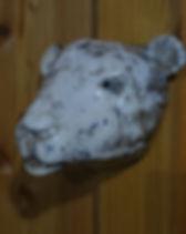 Eisbär, Tierstudie