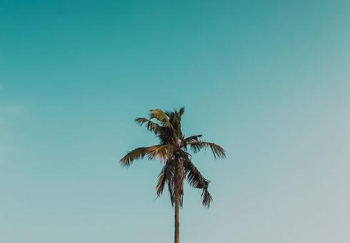 palmtree2.jpg