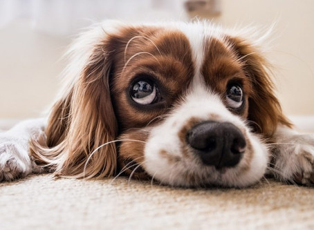 How To Spot If Your Dog Is Stressed?