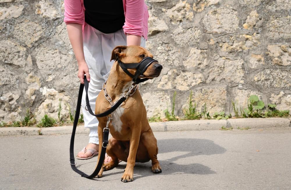 dog on led with muzzle on