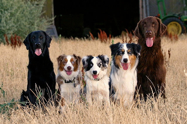 dogs most prone to joint problems