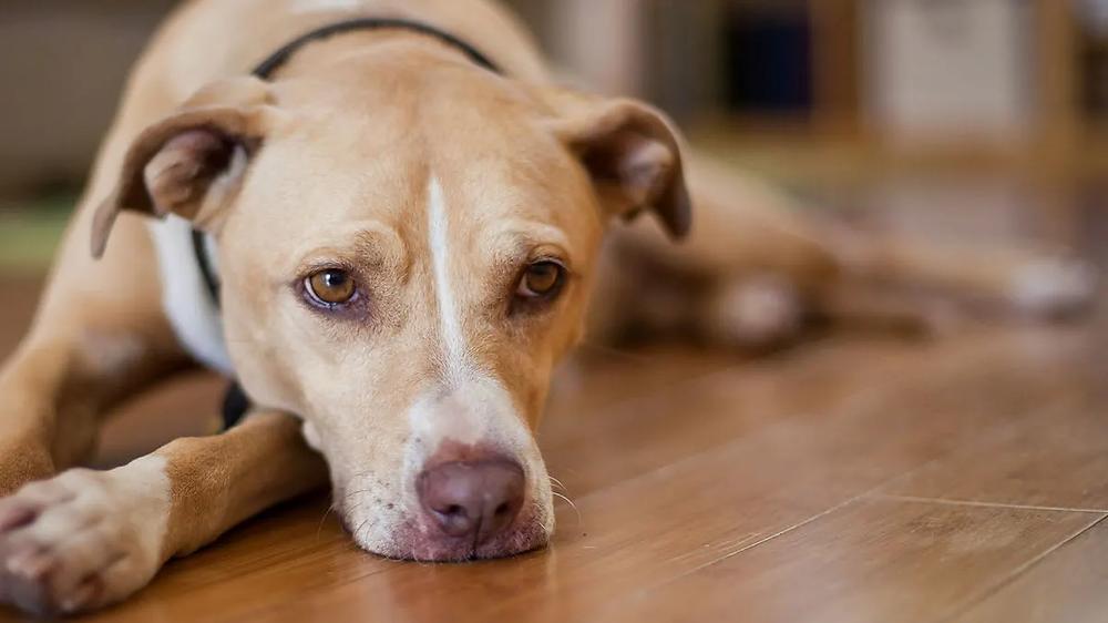 dog looking dejected