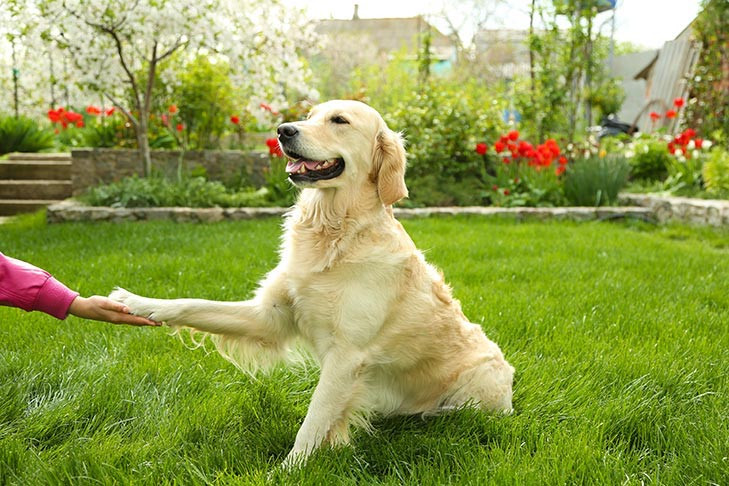 teaching dog new trick outside in garden
