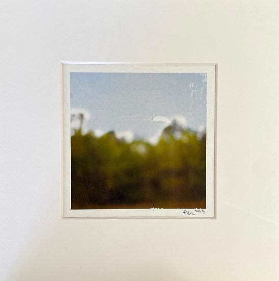"""Ann Dinwiddie Madden- """"Green Pines, Kiln"""""""