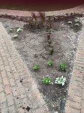 Planting Nobscussett Park2.JPG