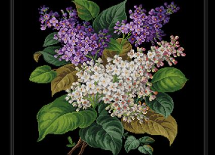 Berlin  Hyacinth Flower