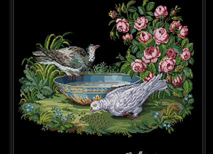 Antique Roses and Pigeons