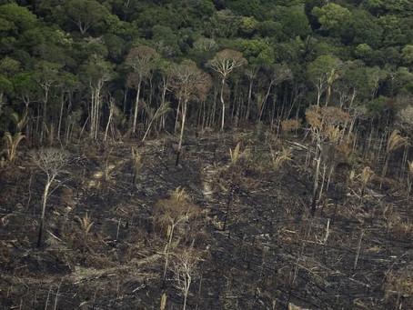 Amazônia tem desmatamento recorde em 2020