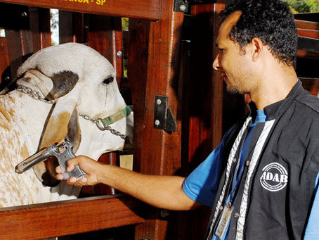 Quase 10 milhões de animais devem ser vacinados contra febre aftosa