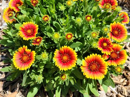 Summer Heat Killing Your Plants?