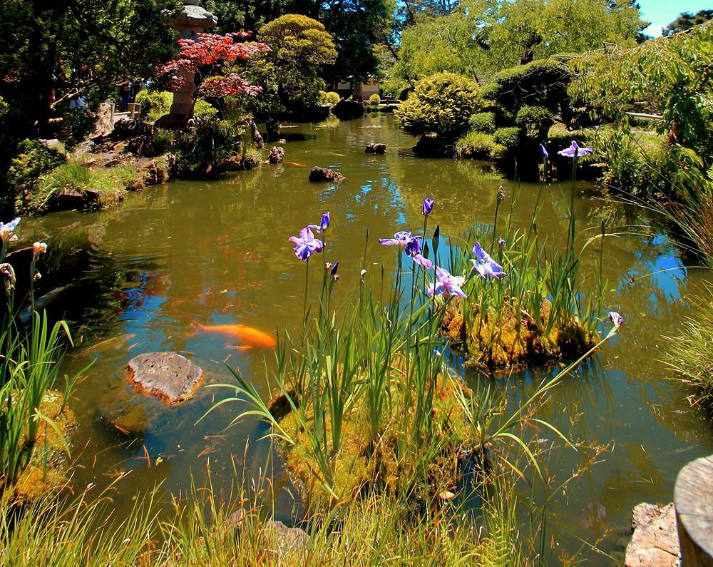 pond, native plants, bioswale, water garden, rain garden, summit outdoor designs, summit designs, outdoor designs, pond builder, small pond, koi pond, plants for ponds