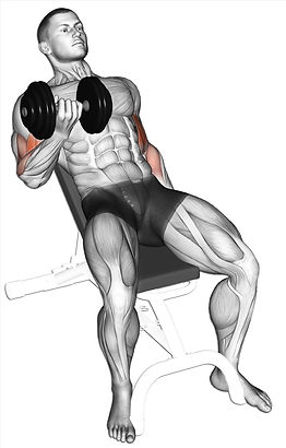4 Incline Curls.jpg
