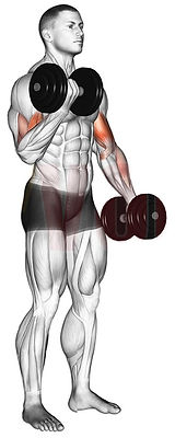 3 Dumbell Curls.jpg