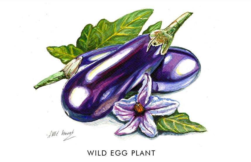 Wild Egg Plant