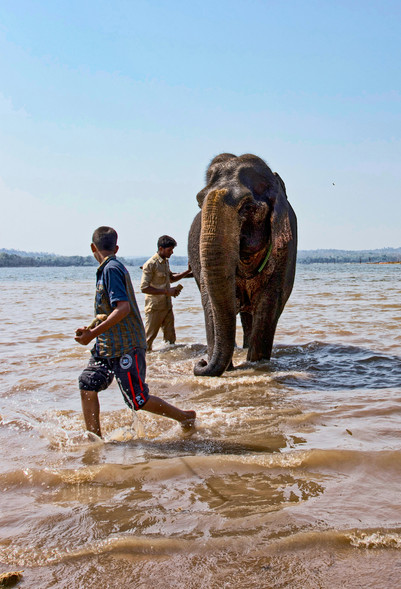 Bathing the elephant