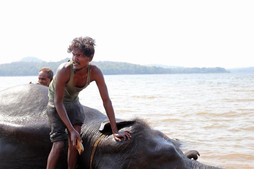 Bathing the elephant 2