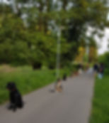VdH Rauenberg Basistraining_11.jpg