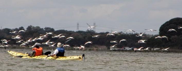 Golfinhos e petroleiros!