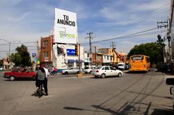 Espectacular Jacarandas