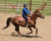 Horseback Riding Photography Thunder Bay, ON, Lakehead Light Horse Association