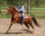 Horse Riding Photography Thunder Bay, ON, Lakehead Light Horse Association