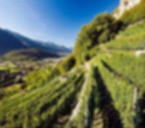 vini-della-valtellina.jpg