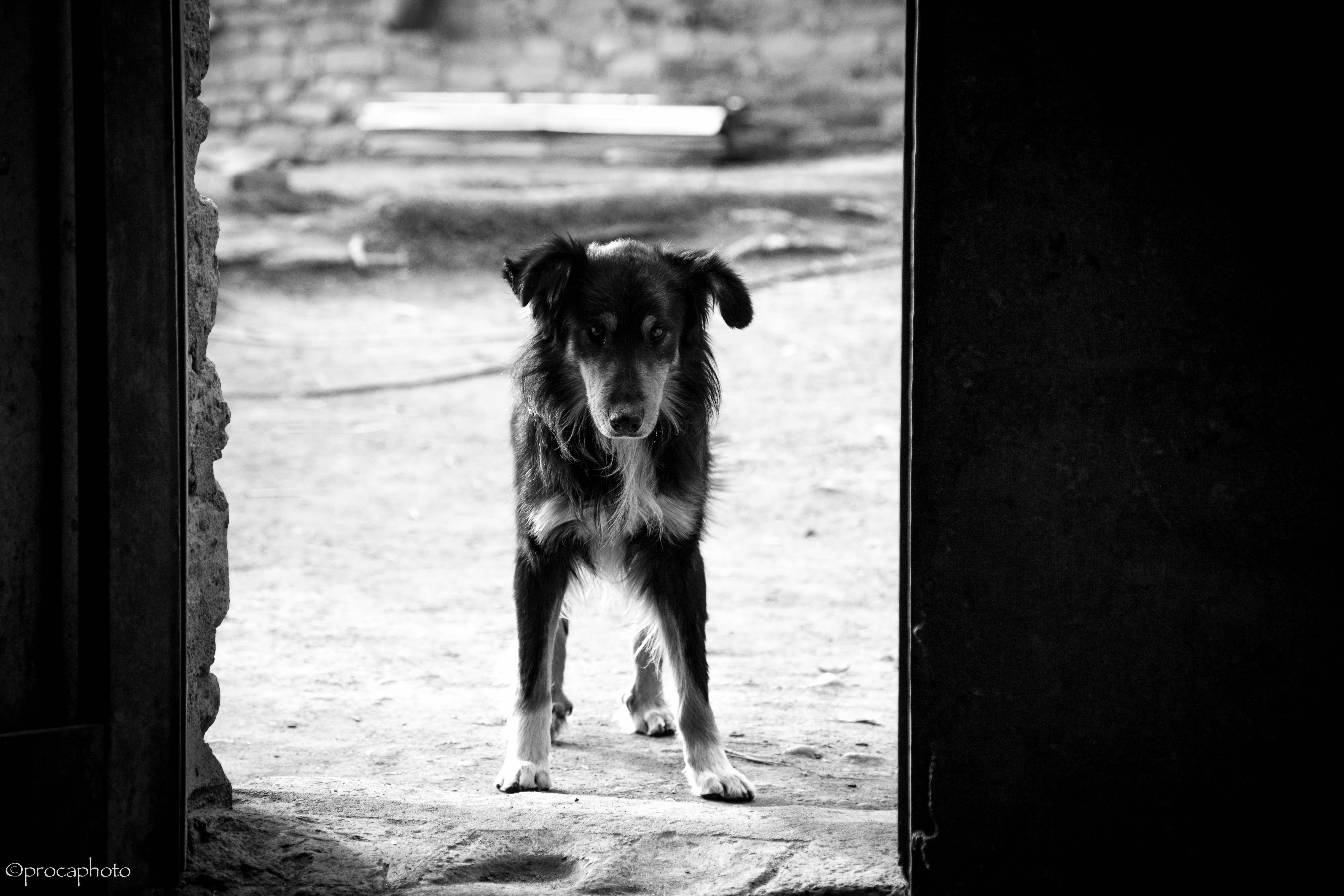 el perro de Graciela