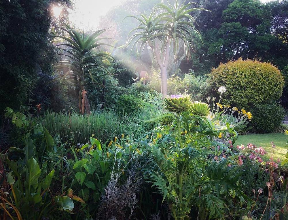 My garden in the morning mist