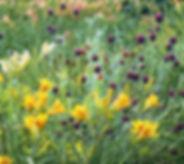 garden design slider.jpg