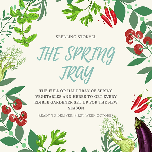 The Spring Tray