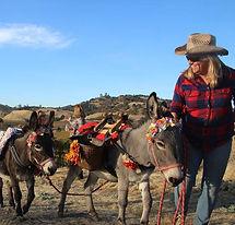 Donkeys at Aloriia.jpg