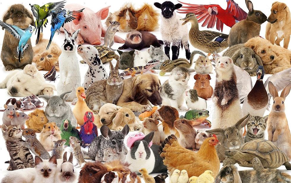 Pets1.jpg